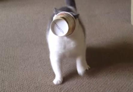 ハーゲンダッツのカップが頭から抜けなくなった猫