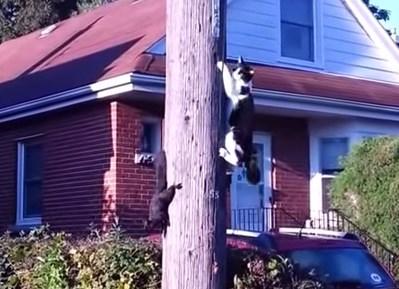 猫 vs. リス 圧倒的に身軽なリスにしてやられる猫