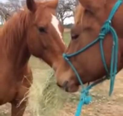 ガールフレンドに干し草をプレゼントする馬