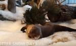 雪だー!水族館カワウソが大はしゃぎ