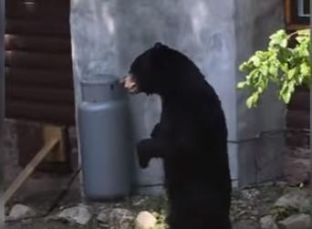 不審者発見!と思ったら二足歩行するクマだった!