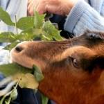 AnimalCâlin - Médiation animale Tarn Midi-Pyrénées