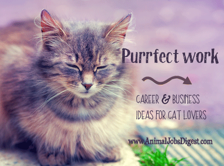 Career & business ideas for cat lovers