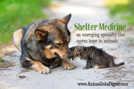 Shelter Medicine - emerging veterinary specialty to help rescue animals
