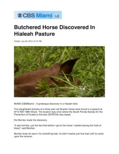 cbs 4 horse slaughter 7-23-15 pdf