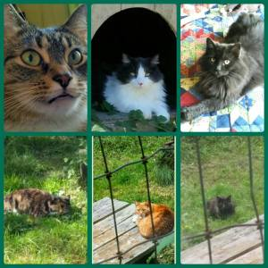 Our cats, Monkey, M, and Sebastian, all rescues, and Alley, Red Schoendienst, and Oops, three ferals who lived here before we did, fixed and added to our household. (Beth Clifton photo)
