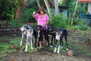 Katherine Gibson and her Great Danes in Zancudo.