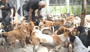 John Dalley, chief executive of the Soi Dog Foundation, with rescued dogs. (SDF photo)