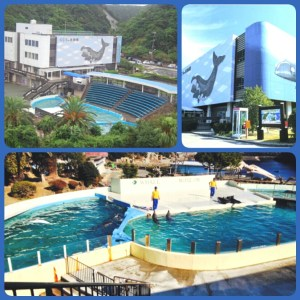 Images of the Taiji Whale Museum from Ric O'Barry's Dolphin Project and Cove Guardians (a project of the Sea Shepherd Conservation Society).