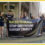 Greyhound racing in Macau,  China runs toward oblivion