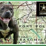 Pit bull attack tests Army will to enforce ban from base housing