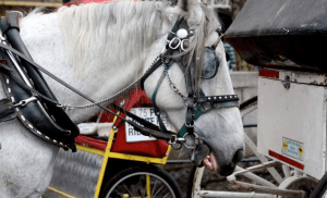 (Coalition to Ban Horse-Drawn Carriages photo)