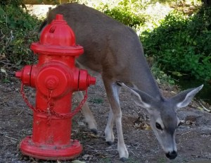 Deer & hydrant face right