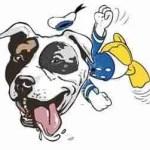 Judge suspends Montreal pit bull ban enforcement