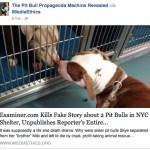 American Pit Bull Examiner flunks examination