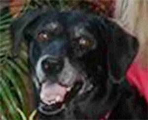 In memory of Meli, beloved dog of Elizabeth Heintzelman. ––Fidel Semperis