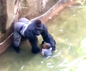 """This image from the O'Connor video is often said to show """"protective"""" behavior."""
