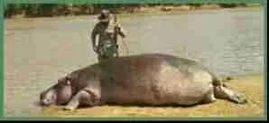 Theo De Merillac standing over dead hippo. (Facebook photo)