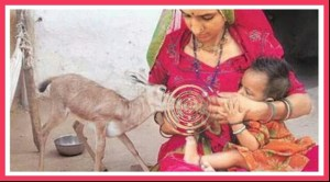 Bishnoi woman breastfeeds a chinkara with her own baby. (Flickr photo)