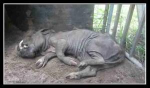 Buddy died. (PETA photo)