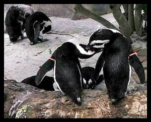 Penguins at Lowry Park Zoo. (Robbins family photo)