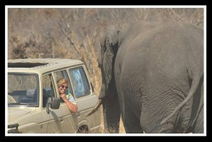 Sharon Pincott & elephant. (Courtesy of Sharon Pincott)