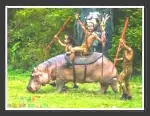 Hippo at Chimelong Safari World.