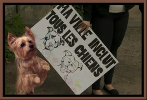 Pit bull advocates tend to ignore the right of small dogs to live in safety. (Beth Clifton collage)