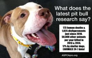 ANIMALS 24-7 data superimposed on ASPCA image, covering up only a black void.