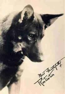 Rin Tin Tin inspired Diana Belais to form the Legion of Hero Dogs.