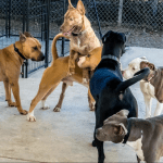 "What is the Austin Animal Center doing to dogs in the name of ""play""?"
