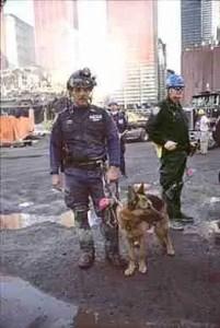 SAR dog on duty at the World Trade Center. (Joel Meyerowitz photo)