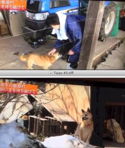 While money donated to help animals after the Fukushima disaster remains unspent,  dogs like Taiyo still await help.