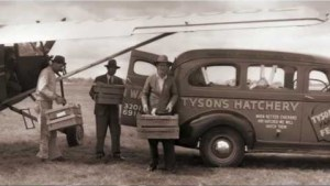 The first Tyson chicken transport by air, 1946.