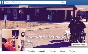 Walter the alleged service pit bull was on May 28, 2015 ruled a dangerous dog in Itawamba County, Mississippi, after repeatedly lunging at neighbors, including a girl with Downs Syndrome.