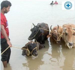 (Blue Cross of India photo)