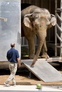 Then-Elephant Sanctuary manager Scott Blais unloading one of the Hawthorn elephants on arrival at the sanctuary. (Elephant Sanctuary photo)