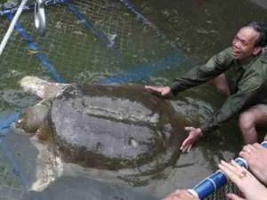 Capture team moves Cu Rua to Lao Dong Island on April 3, 2011. (Asian Turtle Program photo)
