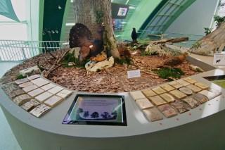 NÖ Museum, Exhibition design