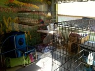 Anita's Puppy Palace Pet Boarding Kennels Cattery