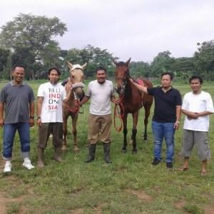 coach bisnis grounded belajar cara berkuda yang baik
