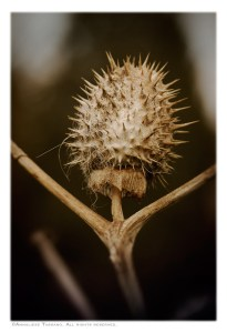A spiky, spiny seed pod of a dead weed plant looks like a woman with arms outstretched in a turtleneck.