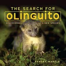 Photo of an animal, the olinguito, in a treetop.