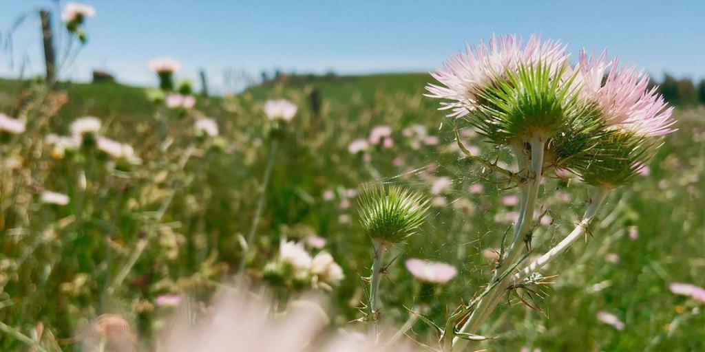 fiori fiori fiori