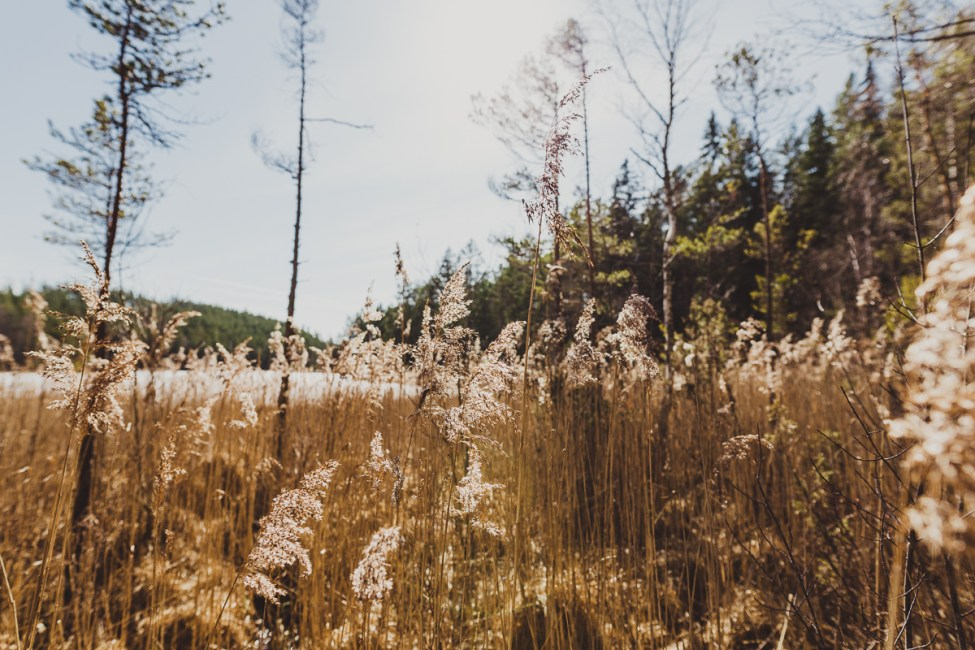 Jaga solens strålar i Norra Kvills Nationalpark