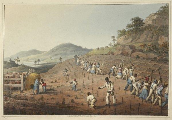 Slaves planting and tilling.