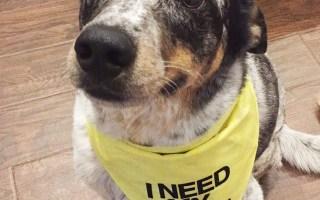 Pins I've tried: I Need My Space Dog Bandana