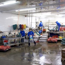 For Edible Long Island, A Clam-Sorting Equipment Company Grows in Bohemia May 2017