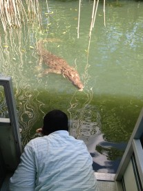 Photo Credit: Apple Vacations, Guide checking out the crocs on the black river