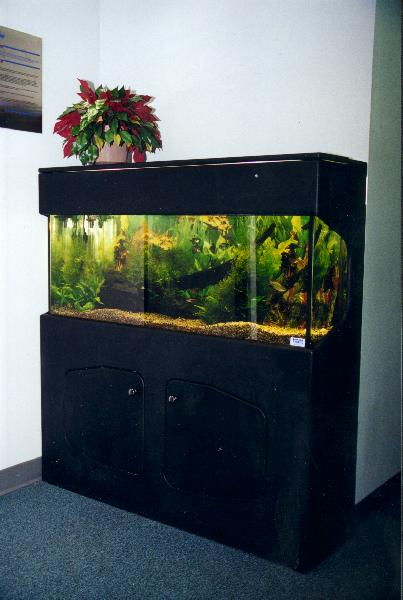 black finished fresh water tropical four foot fish tank